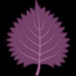 赤紫蘇ジュースの効果は?気になる保存期間や夏バテや花粉症、糖尿病への効き目は?